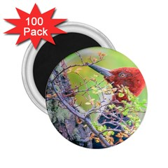 Woodpecker At Forest Pecking Tree, Patagonia, Argentina 2.25  Magnets (100 pack)