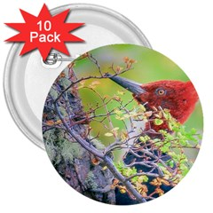 Woodpecker At Forest Pecking Tree, Patagonia, Argentina 3  Buttons (10 pack)