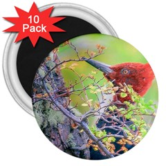Woodpecker At Forest Pecking Tree, Patagonia, Argentina 3  Magnets (10 pack)