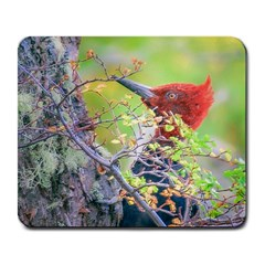Woodpecker At Forest Pecking Tree, Patagonia, Argentina Large Mousepads