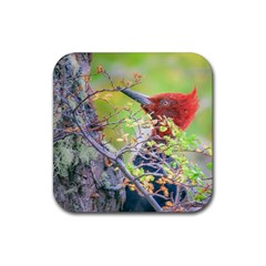 Woodpecker At Forest Pecking Tree, Patagonia, Argentina Rubber Square Coaster (4 pack)