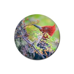 Woodpecker At Forest Pecking Tree, Patagonia, Argentina Rubber Coaster (Round)