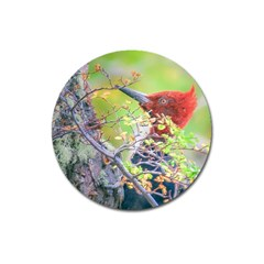 Woodpecker At Forest Pecking Tree, Patagonia, Argentina Magnet 3  (Round)