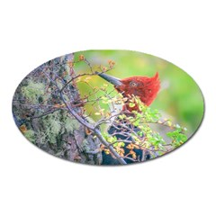 Woodpecker At Forest Pecking Tree, Patagonia, Argentina Oval Magnet