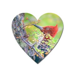 Woodpecker At Forest Pecking Tree, Patagonia, Argentina Heart Magnet