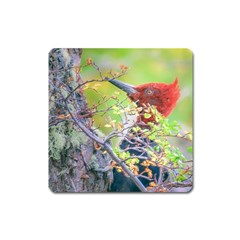 Woodpecker At Forest Pecking Tree, Patagonia, Argentina Square Magnet