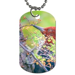 Woodpecker At Forest Pecking Tree, Patagonia, Argentina Dog Tag (One Side)