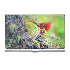 Woodpecker At Forest Pecking Tree, Patagonia, Argentina Business Card Holders