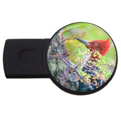 Woodpecker At Forest Pecking Tree, Patagonia, Argentina USB Flash Drive Round (2 GB)