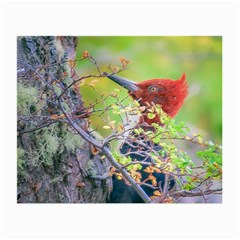 Woodpecker At Forest Pecking Tree, Patagonia, Argentina Small Glasses Cloth