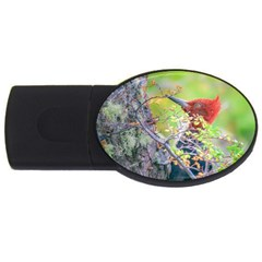 Woodpecker At Forest Pecking Tree, Patagonia, Argentina USB Flash Drive Oval (4 GB)