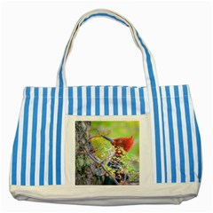 Woodpecker At Forest Pecking Tree, Patagonia, Argentina Striped Blue Tote Bag