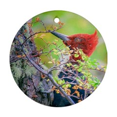 Woodpecker At Forest Pecking Tree, Patagonia, Argentina Round Ornament (Two Sides)