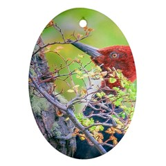 Woodpecker At Forest Pecking Tree, Patagonia, Argentina Oval Ornament (Two Sides)