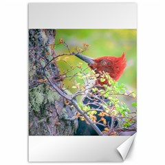 Woodpecker At Forest Pecking Tree, Patagonia, Argentina Canvas 12  x 18