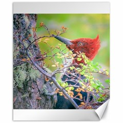 Woodpecker At Forest Pecking Tree, Patagonia, Argentina Canvas 16  x 20