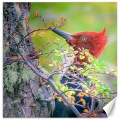 Woodpecker At Forest Pecking Tree, Patagonia, Argentina Canvas 20  x 20
