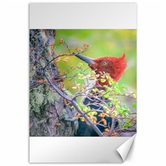 Woodpecker At Forest Pecking Tree, Patagonia, Argentina Canvas 24  x 36