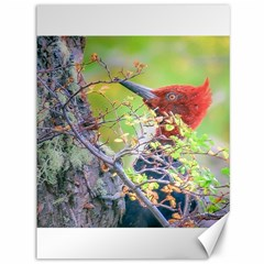Woodpecker At Forest Pecking Tree, Patagonia, Argentina Canvas 36  x 48