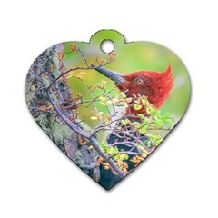 Woodpecker At Forest Pecking Tree, Patagonia, Argentina Dog Tag Heart (One Side)