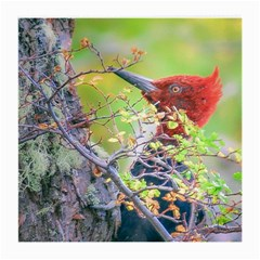 Woodpecker At Forest Pecking Tree, Patagonia, Argentina Medium Glasses Cloth