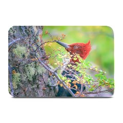 Woodpecker At Forest Pecking Tree, Patagonia, Argentina Plate Mats
