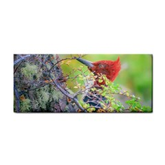 Woodpecker At Forest Pecking Tree, Patagonia, Argentina Cosmetic Storage Cases