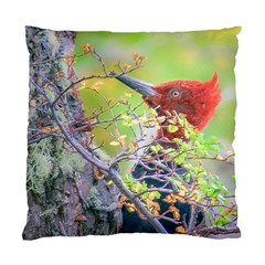 Woodpecker At Forest Pecking Tree, Patagonia, Argentina Standard Cushion Case (Two Sides)