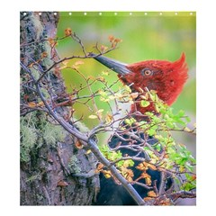Woodpecker At Forest Pecking Tree, Patagonia, Argentina Shower Curtain 66  x 72  (Large)