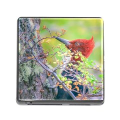 Woodpecker At Forest Pecking Tree, Patagonia, Argentina Memory Card Reader (Square)