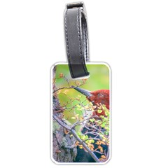 Woodpecker At Forest Pecking Tree, Patagonia, Argentina Luggage Tags (Two Sides)