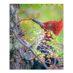 Woodpecker At Forest Pecking Tree, Patagonia, Argentina Shower Curtain 60  x 72  (Medium)