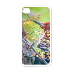 Woodpecker At Forest Pecking Tree, Patagonia, Argentina Apple iPhone 4 Case (White)
