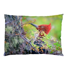Woodpecker At Forest Pecking Tree, Patagonia, Argentina Pillow Case (Two Sides)