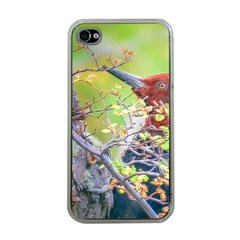 Woodpecker At Forest Pecking Tree, Patagonia, Argentina Apple iPhone 4 Case (Clear)