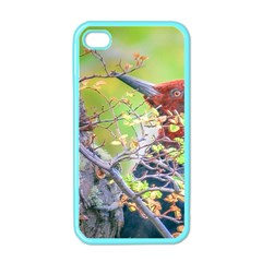Woodpecker At Forest Pecking Tree, Patagonia, Argentina Apple iPhone 4 Case (Color)