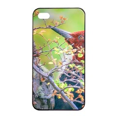 Woodpecker At Forest Pecking Tree, Patagonia, Argentina Apple iPhone 4/4s Seamless Case (Black)