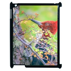 Woodpecker At Forest Pecking Tree, Patagonia, Argentina Apple iPad 2 Case (Black)