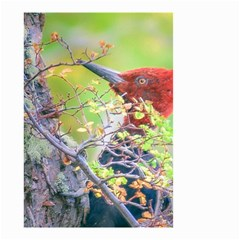 Woodpecker At Forest Pecking Tree, Patagonia, Argentina Small Garden Flag (Two Sides)