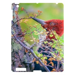 Woodpecker At Forest Pecking Tree, Patagonia, Argentina Apple iPad 3/4 Hardshell Case