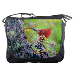 Woodpecker At Forest Pecking Tree, Patagonia, Argentina Messenger Bags