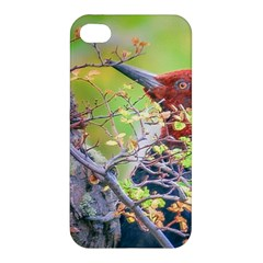 Woodpecker At Forest Pecking Tree, Patagonia, Argentina Apple iPhone 4/4S Premium Hardshell Case