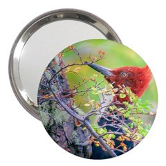 Woodpecker At Forest Pecking Tree, Patagonia, Argentina 3  Handbag Mirrors