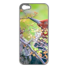 Woodpecker At Forest Pecking Tree, Patagonia, Argentina Apple iPhone 5 Case (Silver)