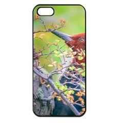 Woodpecker At Forest Pecking Tree, Patagonia, Argentina Apple iPhone 5 Seamless Case (Black)
