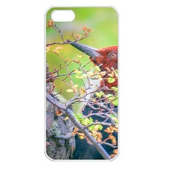 Woodpecker At Forest Pecking Tree, Patagonia, Argentina Apple iPhone 5 Seamless Case (White)
