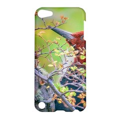Woodpecker At Forest Pecking Tree, Patagonia, Argentina Apple iPod Touch 5 Hardshell Case