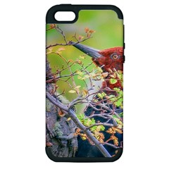 Woodpecker At Forest Pecking Tree, Patagonia, Argentina Apple iPhone 5 Hardshell Case (PC+Silicone)