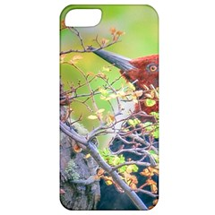 Woodpecker At Forest Pecking Tree, Patagonia, Argentina Apple iPhone 5 Classic Hardshell Case