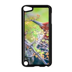 Woodpecker At Forest Pecking Tree, Patagonia, Argentina Apple iPod Touch 5 Case (Black)